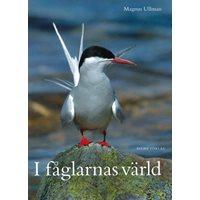 I fåglarnas värld (Ullman)