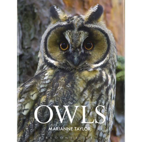Owls (Taylor)