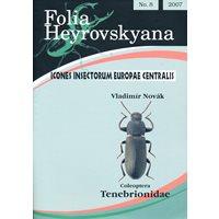 Tenebrionidae (svartbaggar) FHB 8