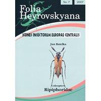 Ripiphoridae (kamhornsbaggar) FHB 7
