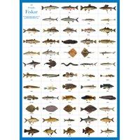 Plansch 58 Svenska fiskar