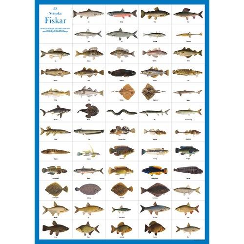 Poster 58 Swedish fish