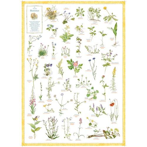Poster 42 Swedish flowers