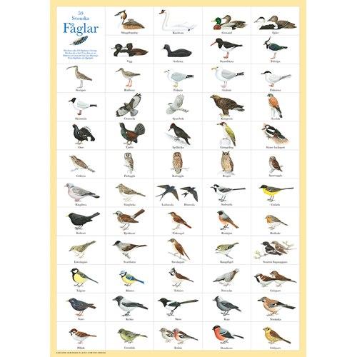 Poster 59 Swedish Birds