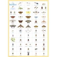 Plansch 61 Svenska insekter