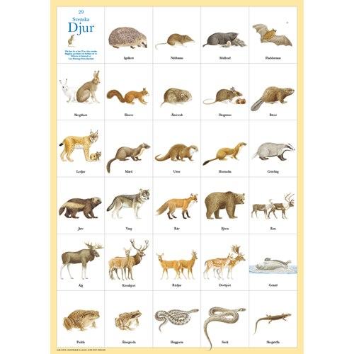 Poster 29 Swedish animals