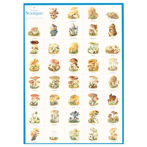 Poster 39 Swedish Mushrooms