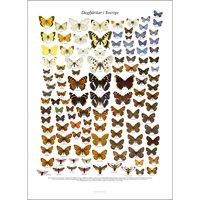 Poster Butterflies in Sweden (Liljeberg)