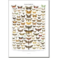 Poster Swedish Moths