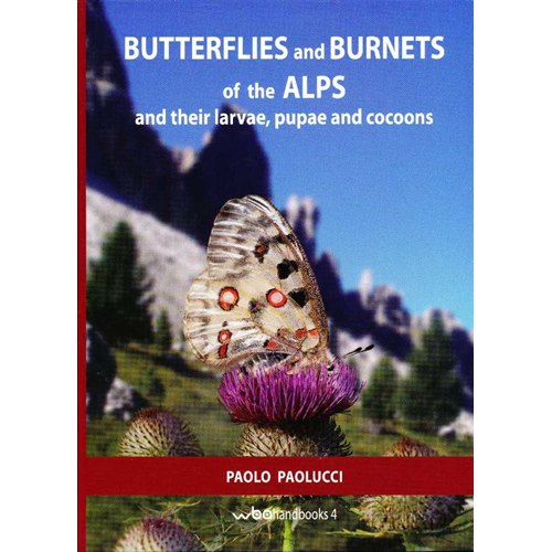 Butterflies and Burnets of the alps (Paolucci)