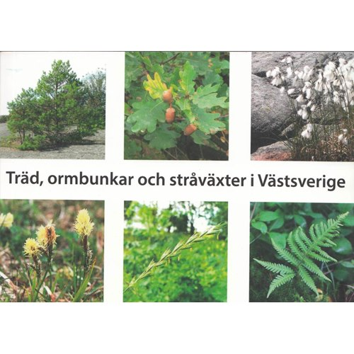 Träd, ormbunkar och stråväxter i Västsverige (Blomgren m.fl