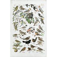 Handduk Trädgårdens fåglar, EKO