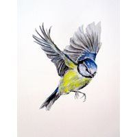 Blue tit Sticker, flying