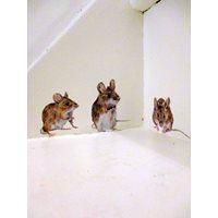 Mice Stickers x 3