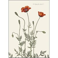 Poster Poppy A3