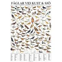 Plansch Fåglar vid Kust o Sjö