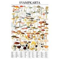 Plansch Svampkarta