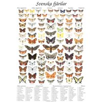 Poster Swedish BUTTERFLIES