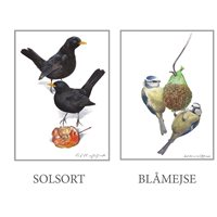 Kortmapp Fåglar mini