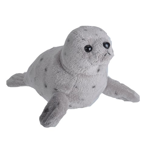 Harbour Seal with sound