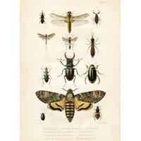 Plansch Insekter Vintage