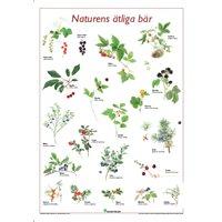 Plansch Naturens ätliga bär, 50 x 70 cm
