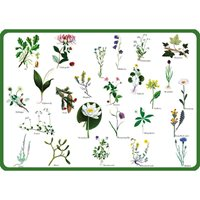 Placemat, Swedish flowers