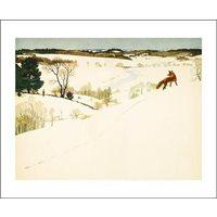 Kort Räv i Vinterlandskap
