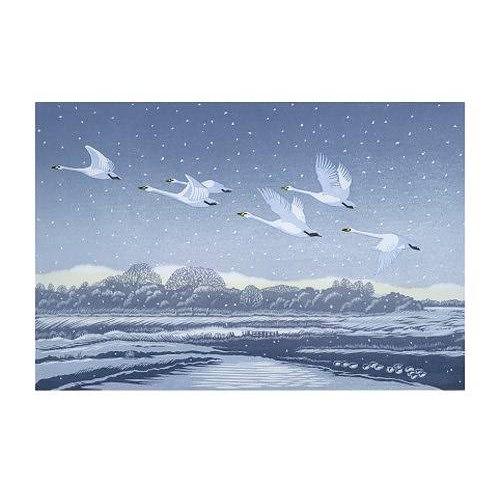 Kort Svanar i Vinterlandskap