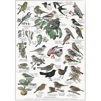 Poster Garden Birds