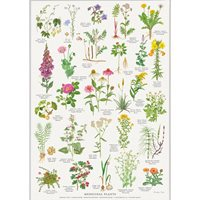 Plansch Läke/Medicinalväxter