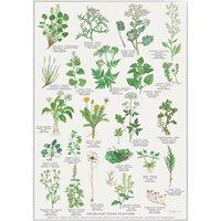 Plansch Ätliga vilda växter