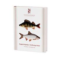 Ryggsträngsdjur: Strålfeniga fiskar (Kullander m.fl.) Nation