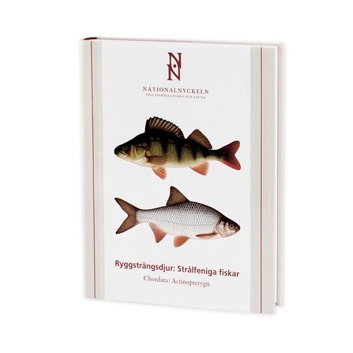 Ryggsträngsdjur: Strålfeniga fiskar (Kullander m.fl.)