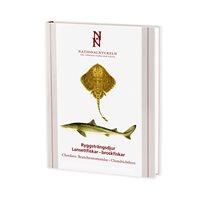 Ryggsträngsdjur: Lansettfiskar & broskfiskar (Kullander) Nat