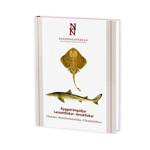 Ryggsträngsdjur: Lansettfiskar & broskfiskar (Kullander)