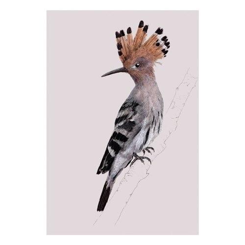 Kort Härfågel