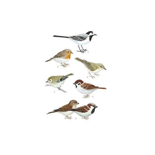 Vykort Småfåglar