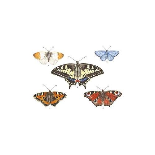 Vykort Dagfjärilar