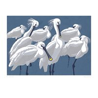 Card with Spoonbills