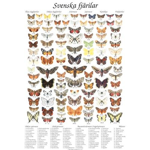 Vykort Svenska Fjärilar A4
