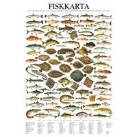 Vykort Fiskkarta A4