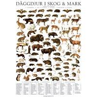 Vykort Däggdjur i skog & mark A4