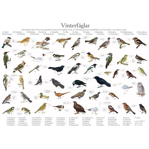 Vykort Vinterfåglar A4