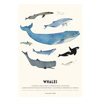 Plansch WHALES