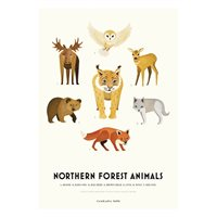Plansch NORTHERN FOREST ANIMALS
