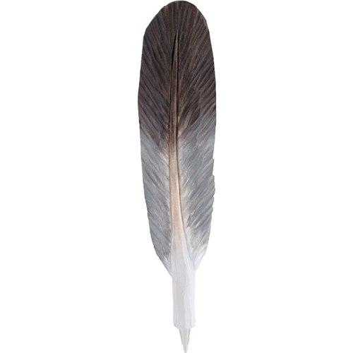 Penna snidad fjäder, Duva