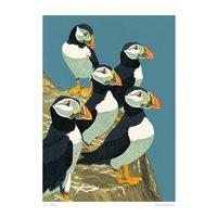 Kort Lunnefåglar